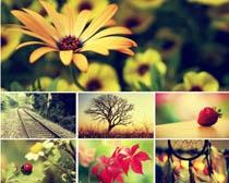 风景花卉唯美效果PS调色动作