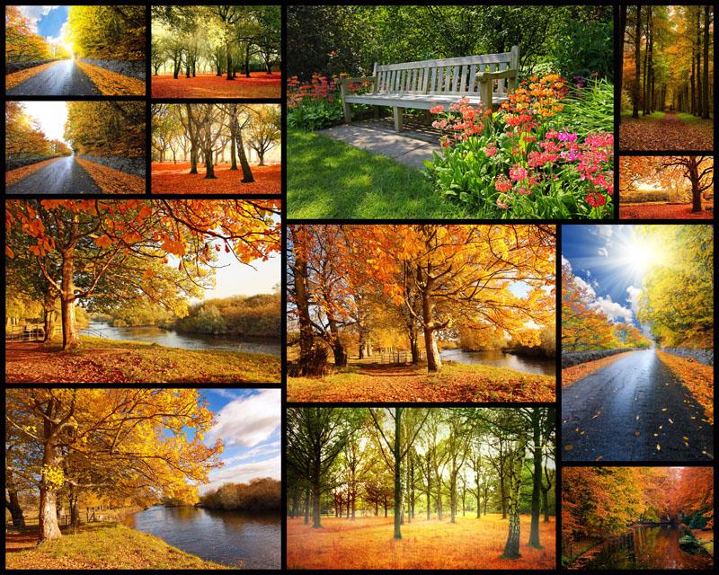 秋天枫叶树景色高清图片