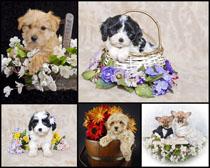 小狗与花朵篮子时时彩娱乐网站