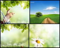 自然清新风景摄影高清图片