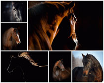 马摄影时时彩娱乐网站