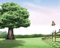 大自然树木风景高清图片