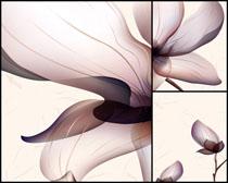 创意花朵设计无框画高清图片