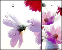 水滴花朵无框画高清图片
