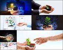 手与生命树苗商业高清图片