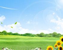 向日葵花朵与草地风景PSD素材