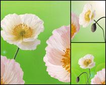 高清花朵无框画图片