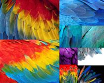 色彩羽毛摄影高清图片
