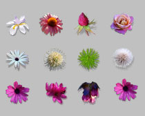漂亮的花朵PNG图标