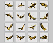 飞翔的金丝雀PNG图标
