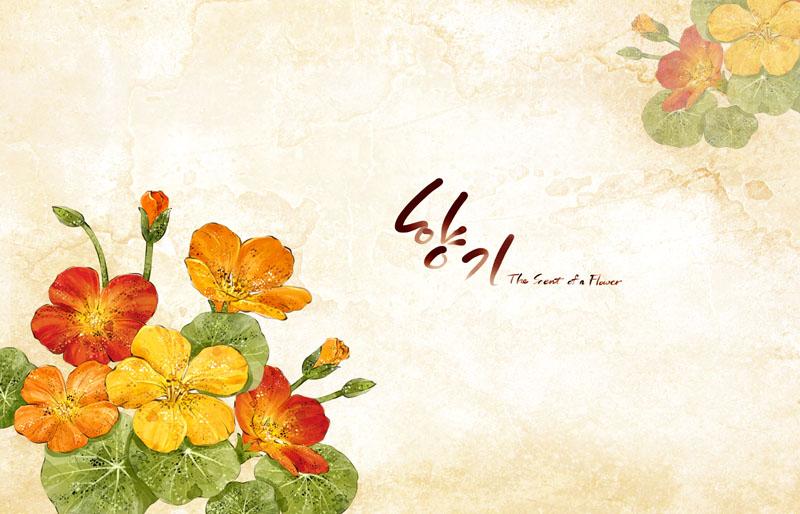 小清新花朵手绘横条