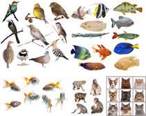 各种动物摄影高清图片