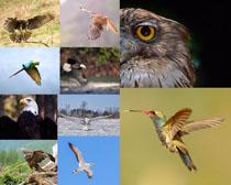 老鹰飞鸟摄影时时彩娱乐网站