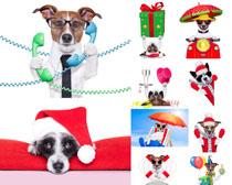 创意小狗摄影时时彩娱乐网站