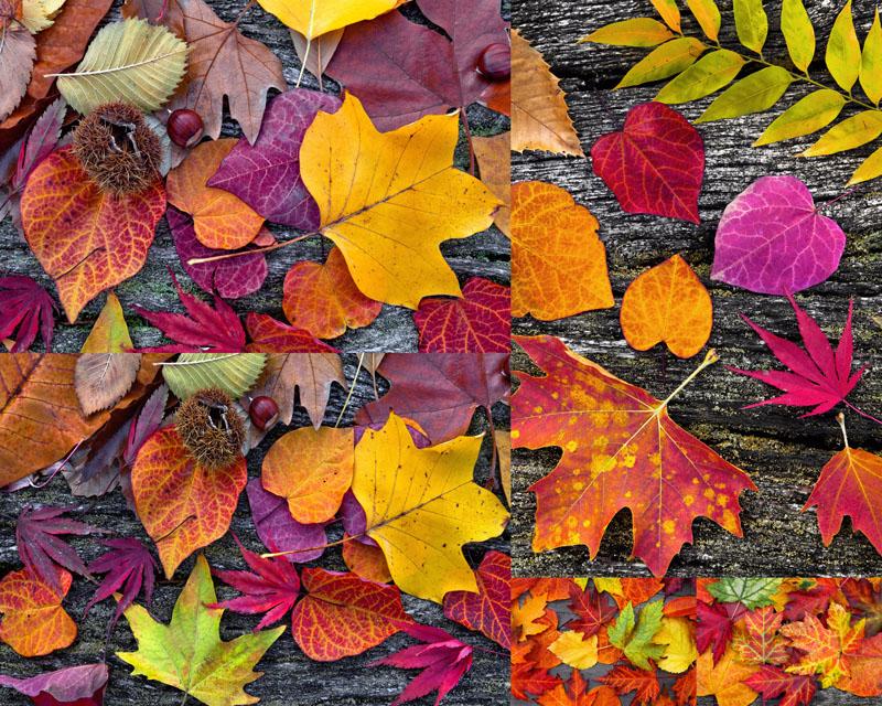 秋天落叶摄影高清图片图片