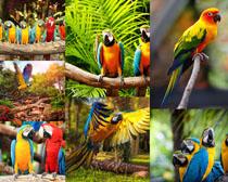 鹦鹉鸟摄影高清图片