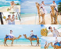 骑骆驼的情侣摄影高清图片