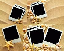 细沙海星照片纸高清图片