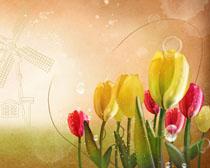 花朵装饰封面设计PSD素材