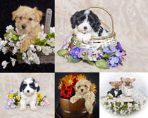 可爱的小狗与花朵摄影时时彩娱乐网站