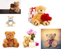 小熊礼物花朵摄影高清图片