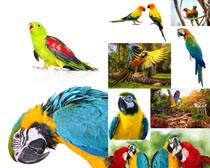 美丽的鹦鹉摄影高清图片