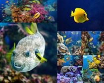 热带鱼摄影高清图片
