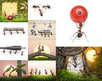 蚂蚁搬运工拍摄高清图片