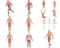 人体肌肉拍摄时时彩娱乐网站