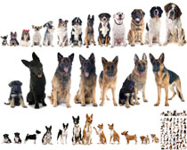 动物狗狗拍摄时时彩娱乐网站