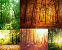 阳光下的森林树木高清图片