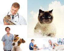 宠物与医师拍摄时时彩娱乐网站