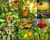 植物果园拍摄高清图片