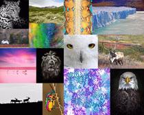 动物世界与风景拍摄高清图片
