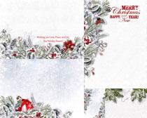圣诞树枝头边框高清图片