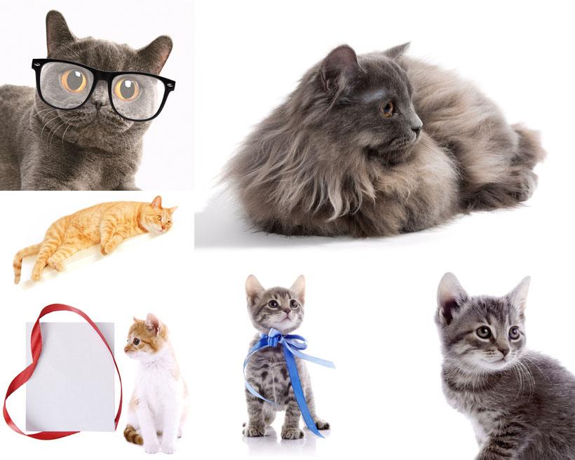 首页 高清图片 动物图片 > 素材信息   关键字: 可爱猫猫猫咪摄影眼镜