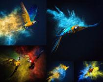 绘画色彩飞鸟摄影高清图片