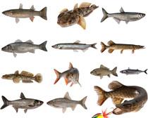 热带鱼拍摄高清图片