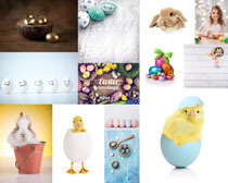 可爱的小鸡小兔摄影时时彩娱乐网站