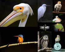 鸟类摄影拍摄高清图片