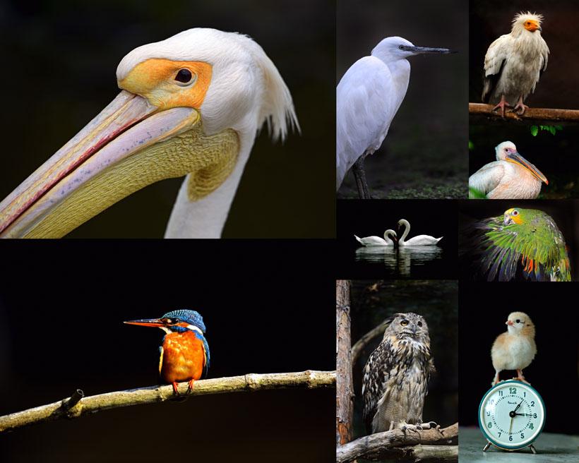 鸟类摄影拍摄时时彩娱乐网站