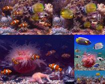 水中生物摄影高清图片