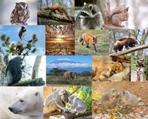 松鼠卡拉动物摄影时时彩娱乐网站