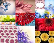 漂亮的花朵花蕊摄影高清图片