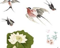 中国风荷花小鸟素材PS笔刷
