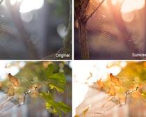 给照片添加暖黄色效果PS调色动作