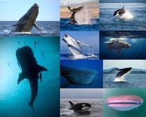 海洋鲸鱼摄影时时彩娱乐网站