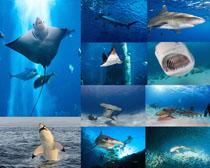 海底动物摄影时时彩娱乐网站
