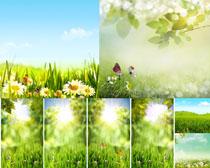 夏日綠草蝴蝶攝影高清圖片