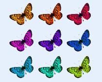 精美的彩色蝴蝶PNG圖標